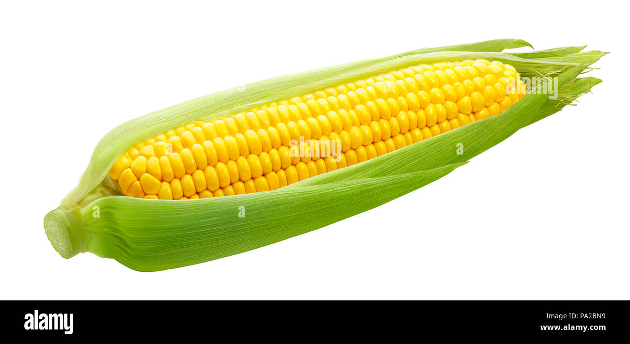 Fresh ear of corn isolated on white background as package design element - Stock Image