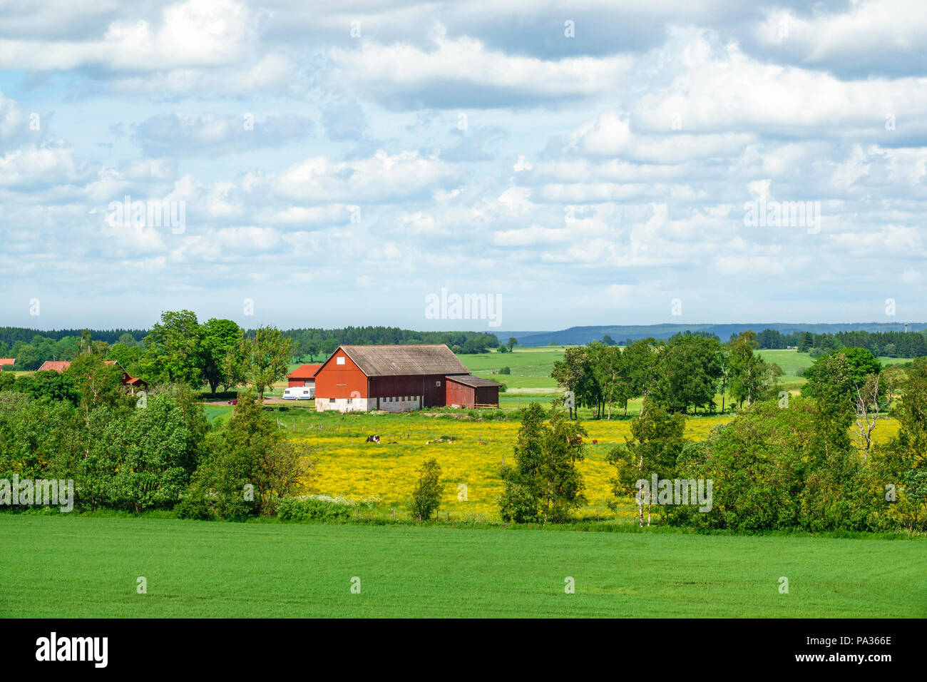 Farm in a rural summer landscape - Stock Image