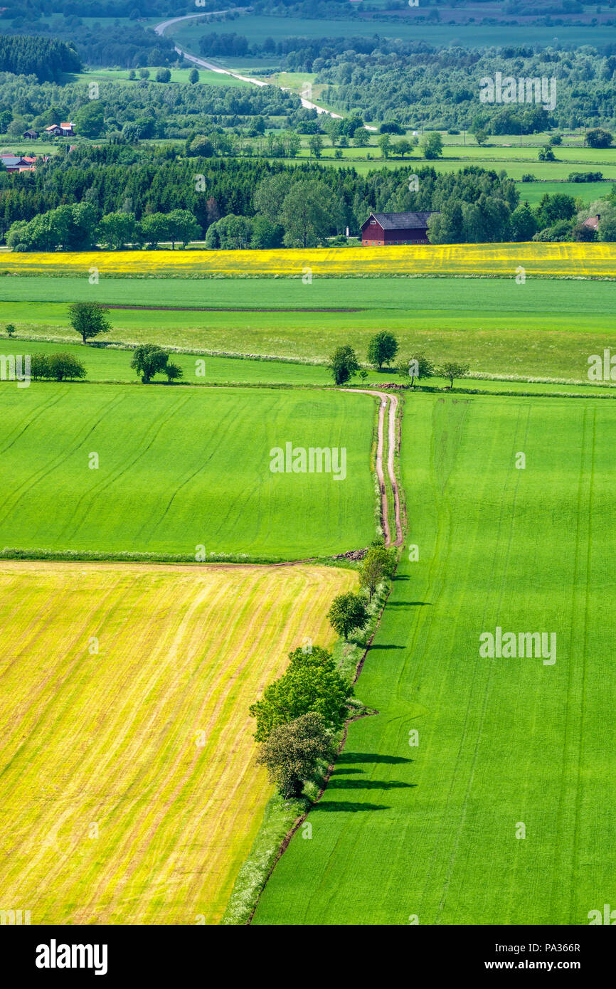 Arable land view with field and trees - Stock Image
