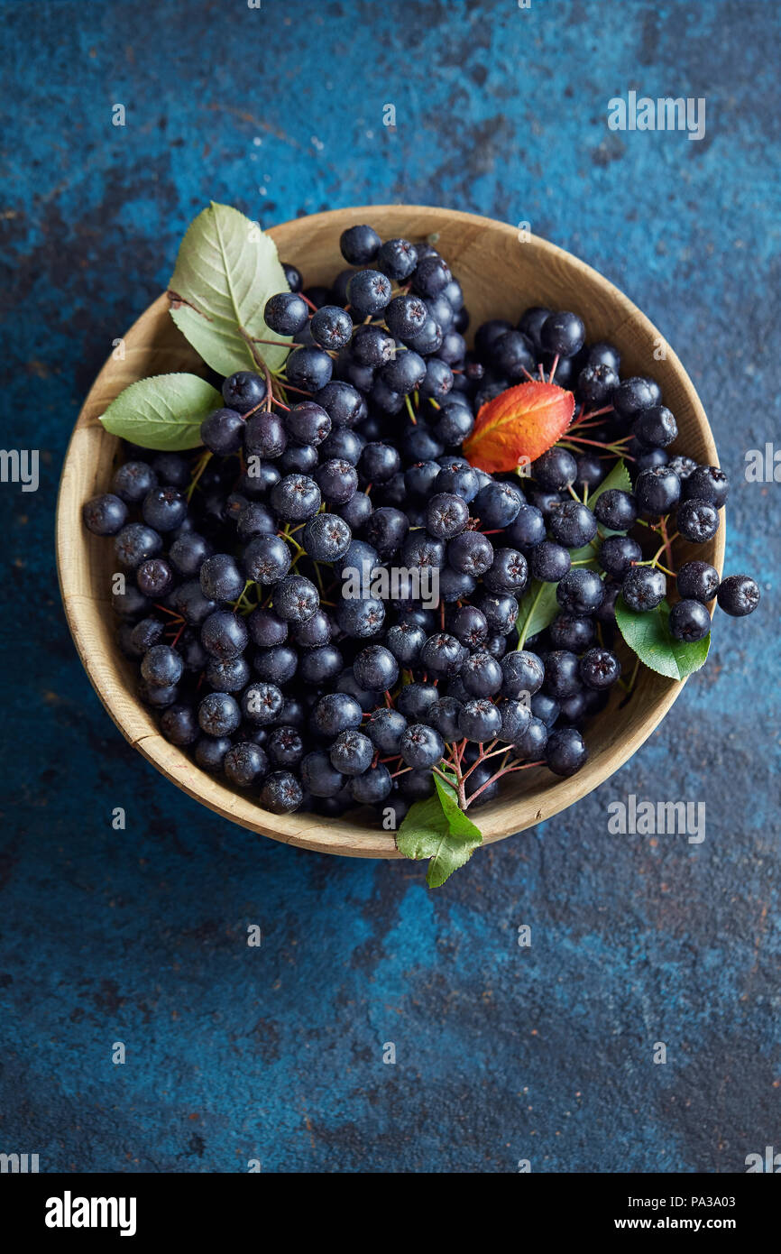 Bowl with freshly picked homegrown aronia berries. Aronia, commonly known as the chokeberry, with leaves - Stock Image