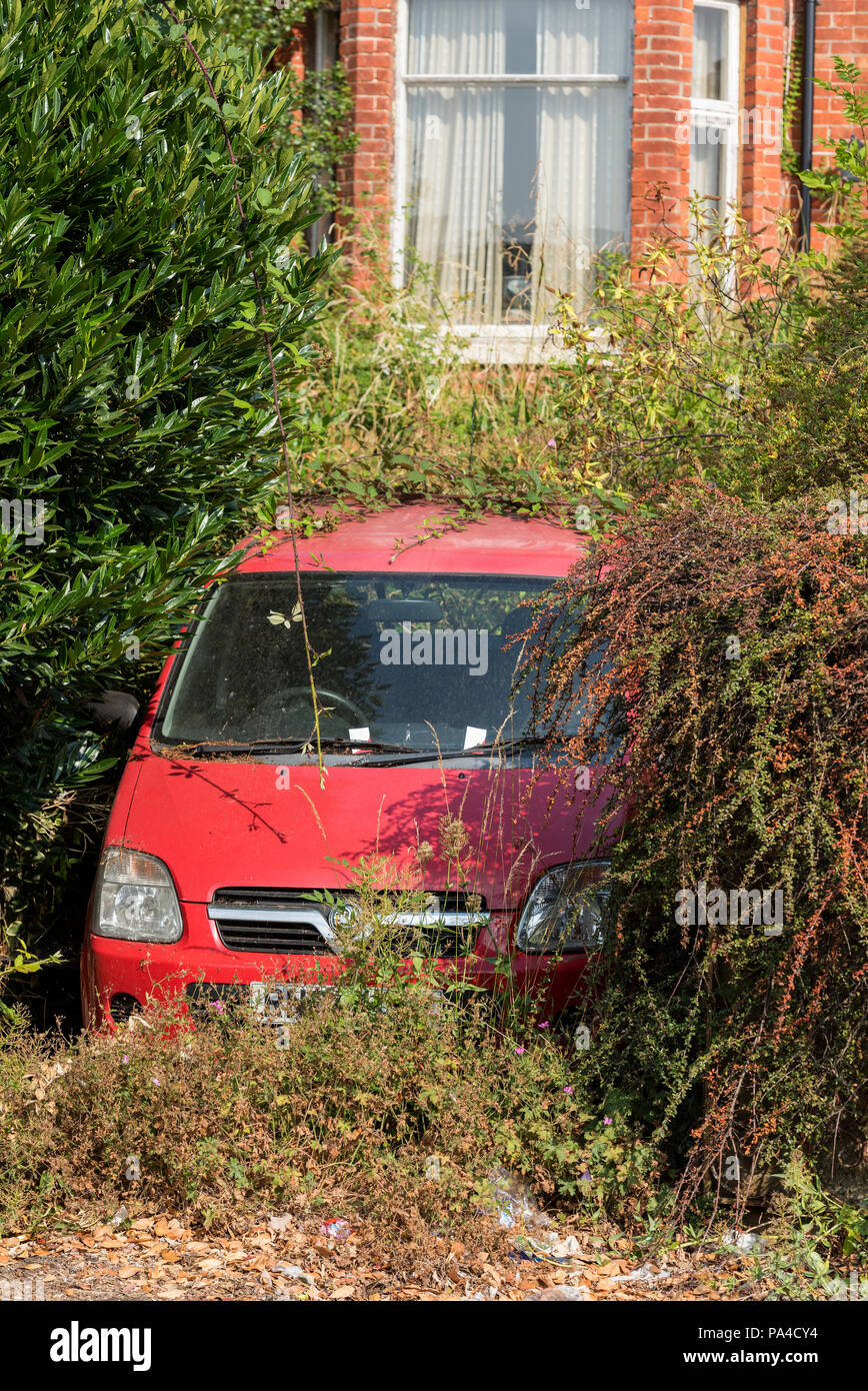 overgrown bushes and shrubs covering a small red car almost hidden beneath foliage on a driveway at a house in state of disrepair - Stock Image