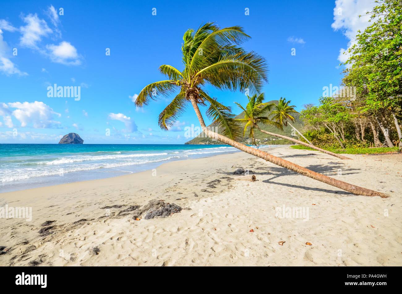 Caribbean Martinique Le Diamant beach coconut - Stock Image
