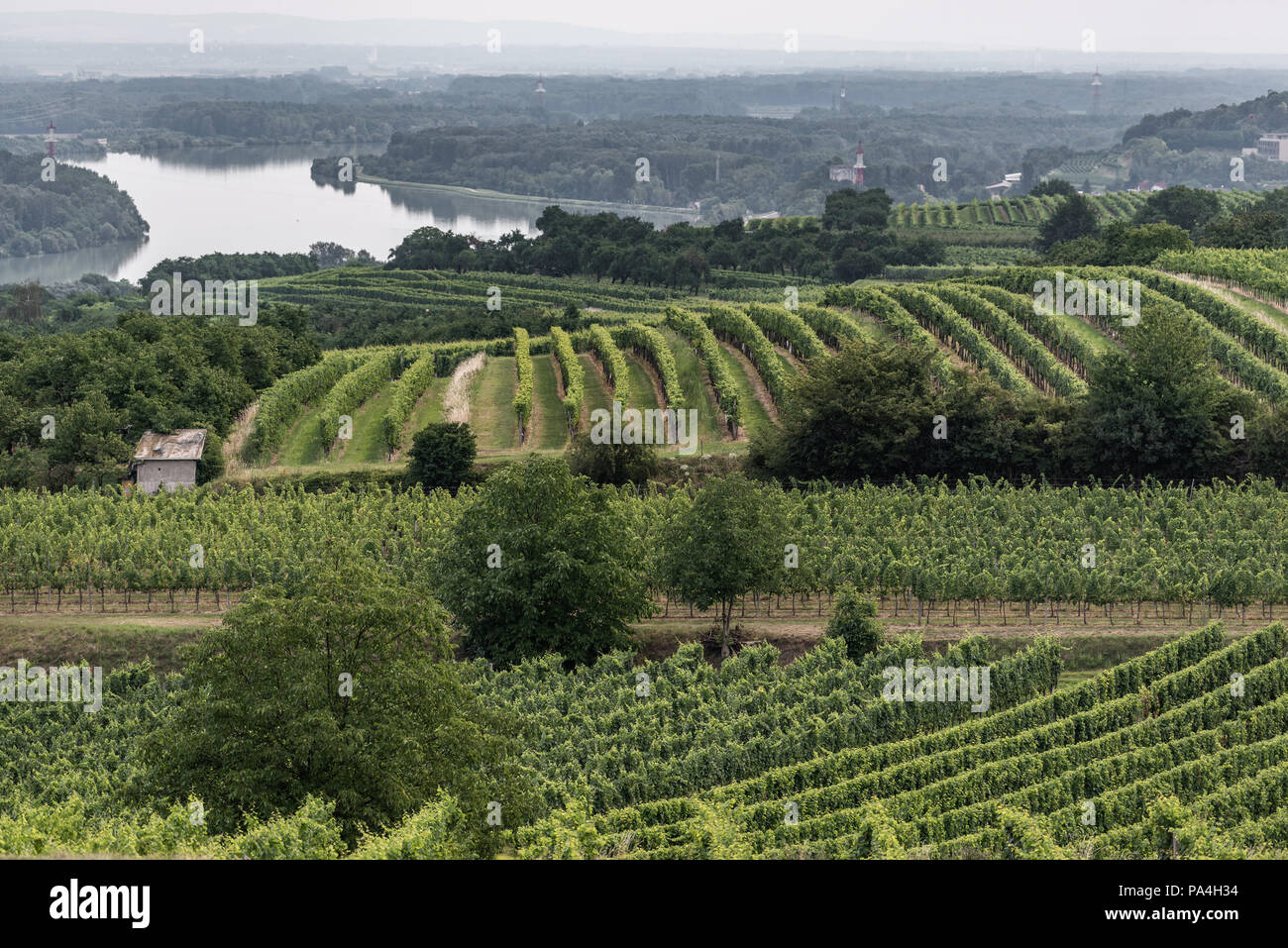 viticulture at Hollenburg, Kremstal, Lower Austria, Austria Stock Photo