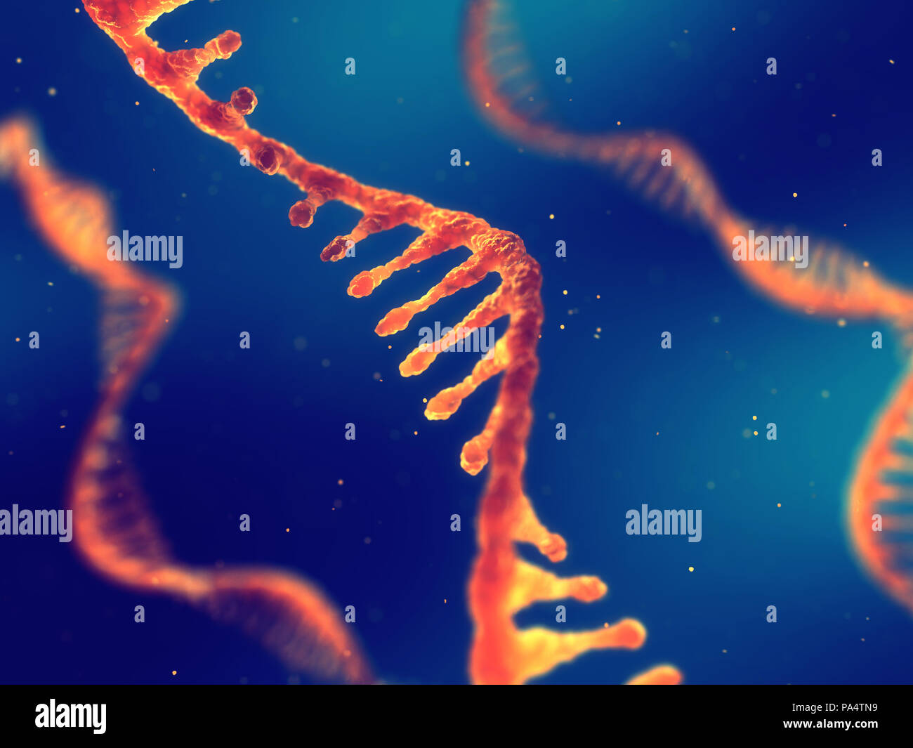 Single strand ribonucleic acid, RNA research and therapy - Stock Image