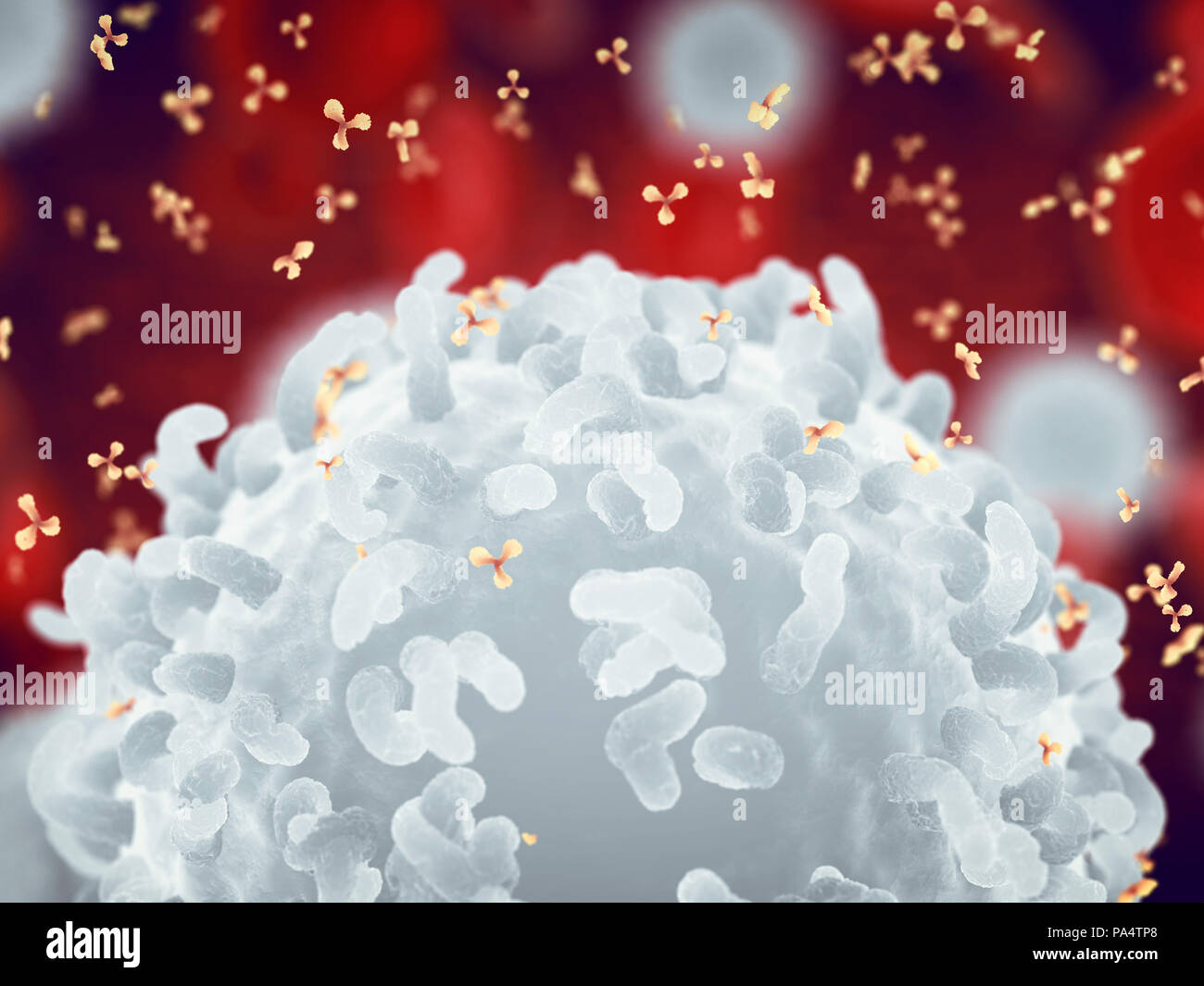 White , red blood cells and antibodies , Leukocytes , Infectious disease and Immune system - Stock Image