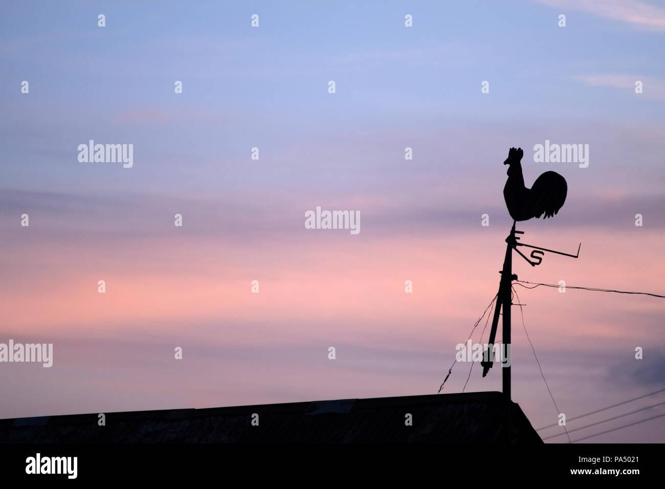 Old cockerel weather vane at sunset. - Stock Image