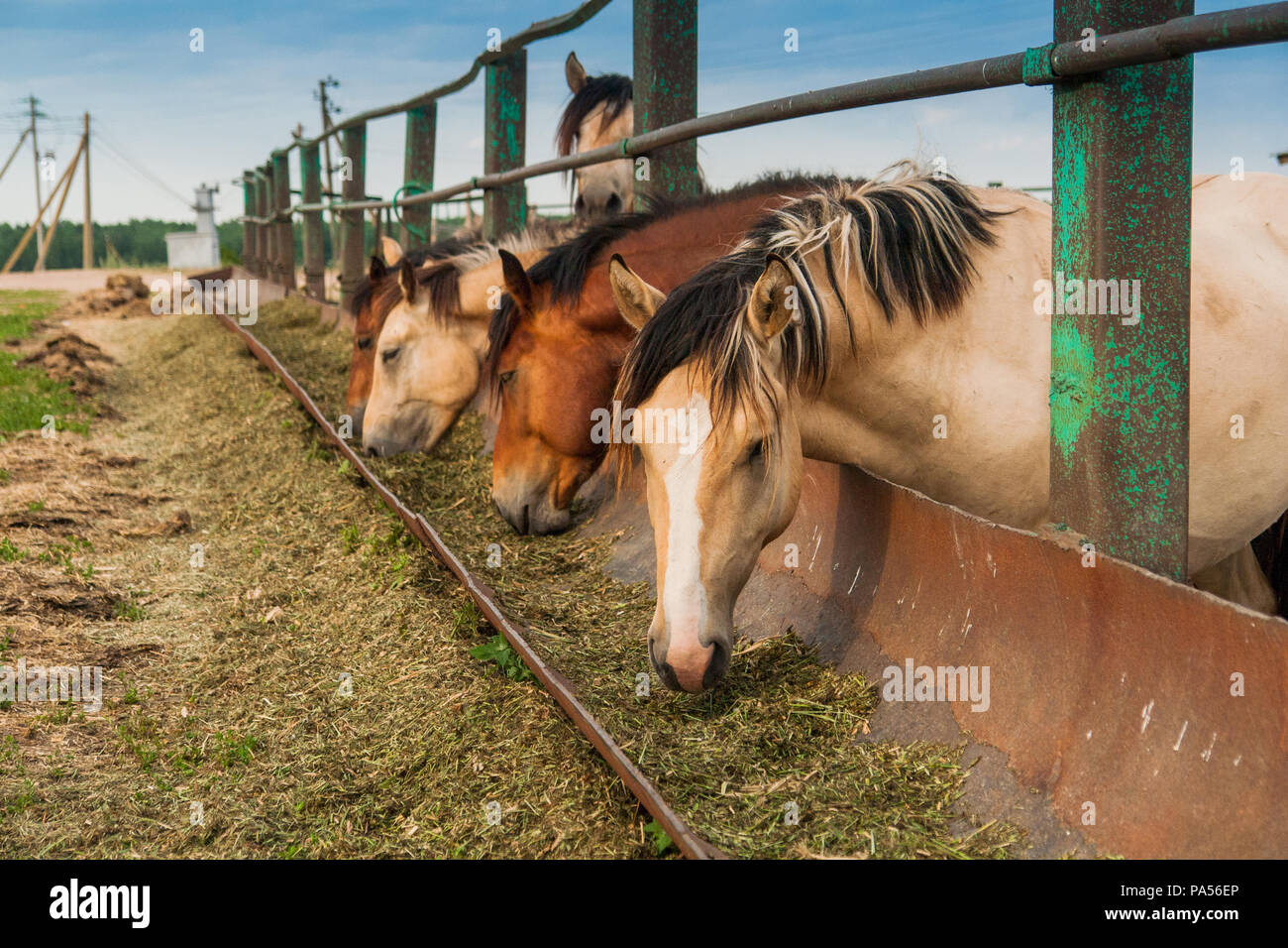 Hungry horses in the pen Stock Photo