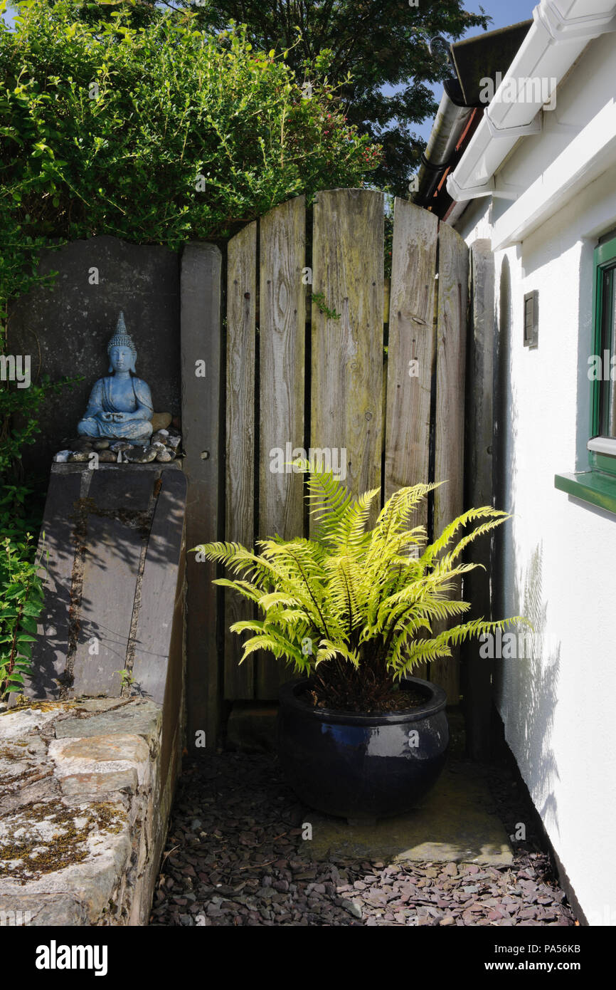 A Buckler Fern (Dryopteris atrata) in a dark blue pot & a pale blue seated Buddha add interest to a dull corner in a garden near Caernarfon, Wales, UK - Stock Image