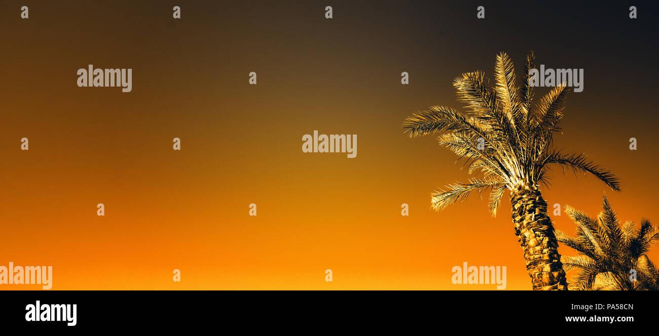 Palms with orange pop art effect  Vintage stylized photo