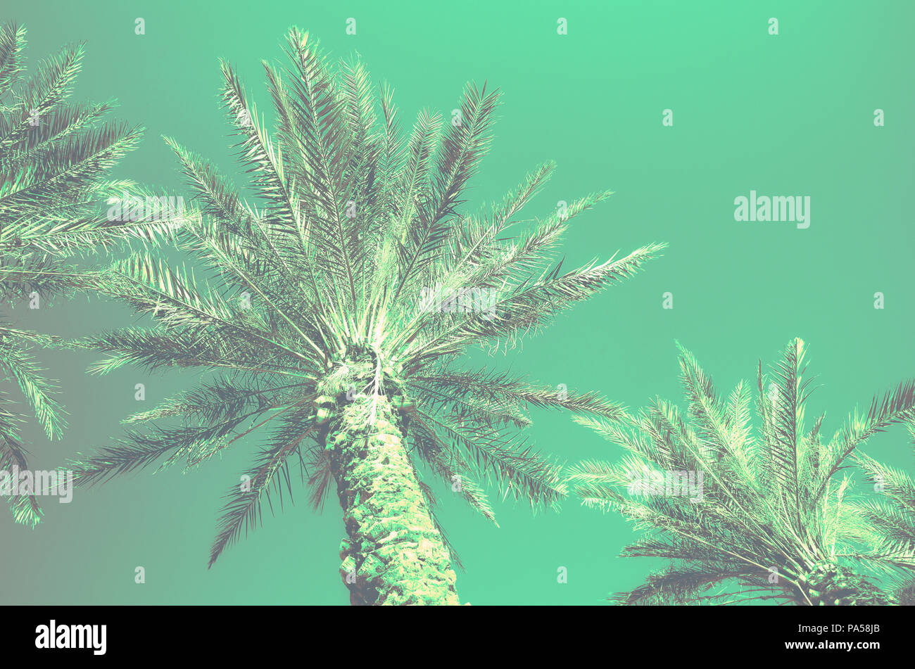 Palms with turquoise pop art effect  Vintage stylized photo