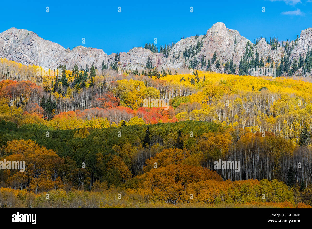 Aspen trees and autumn color along Kebler Pass in West Elk Mountains near Crested Butte, Colorado. - Stock Image