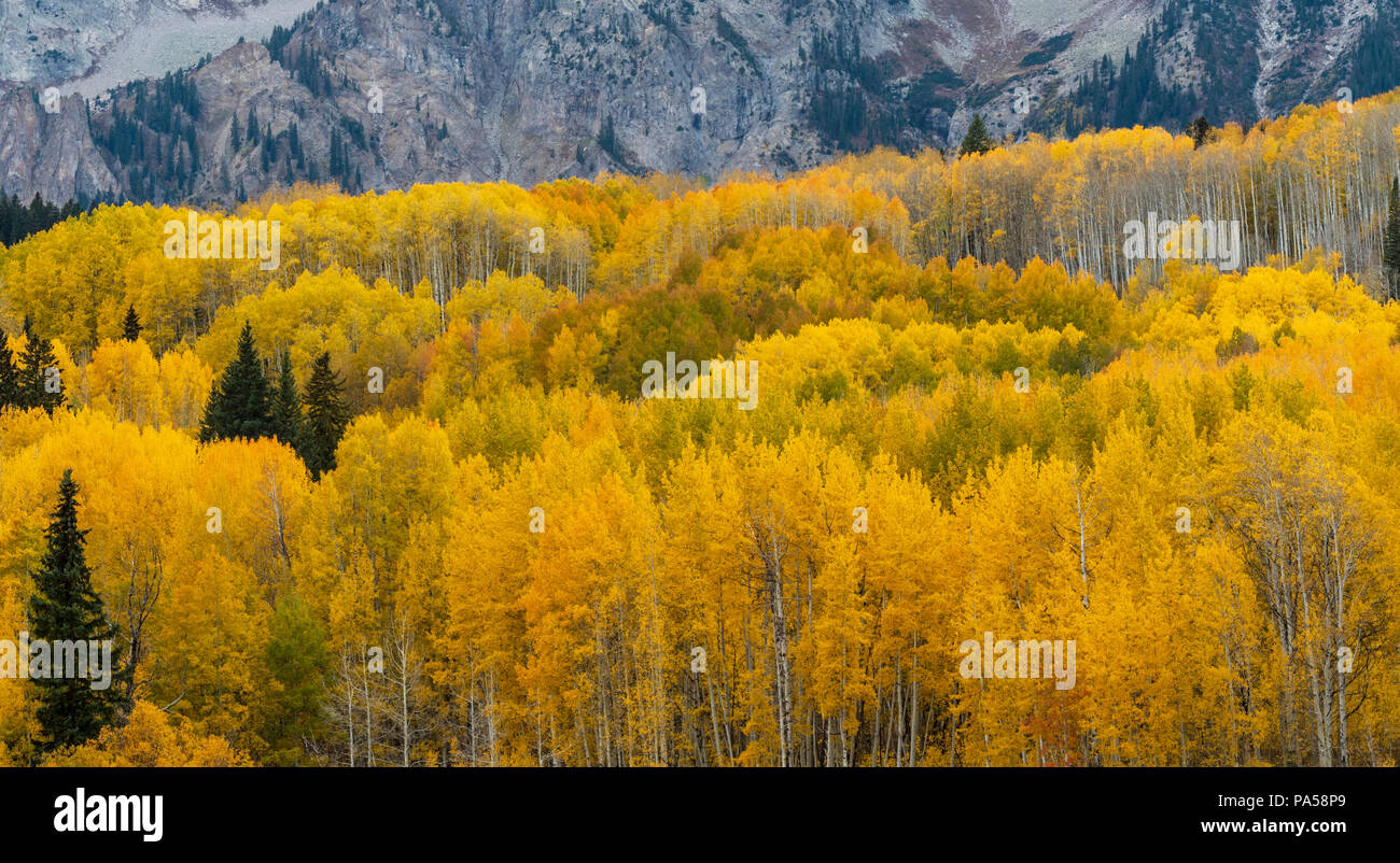 Aspen trees and autumn color along Kebler Pass in West Elk Mountains near Crested Butte, Colorado. Stock Photo