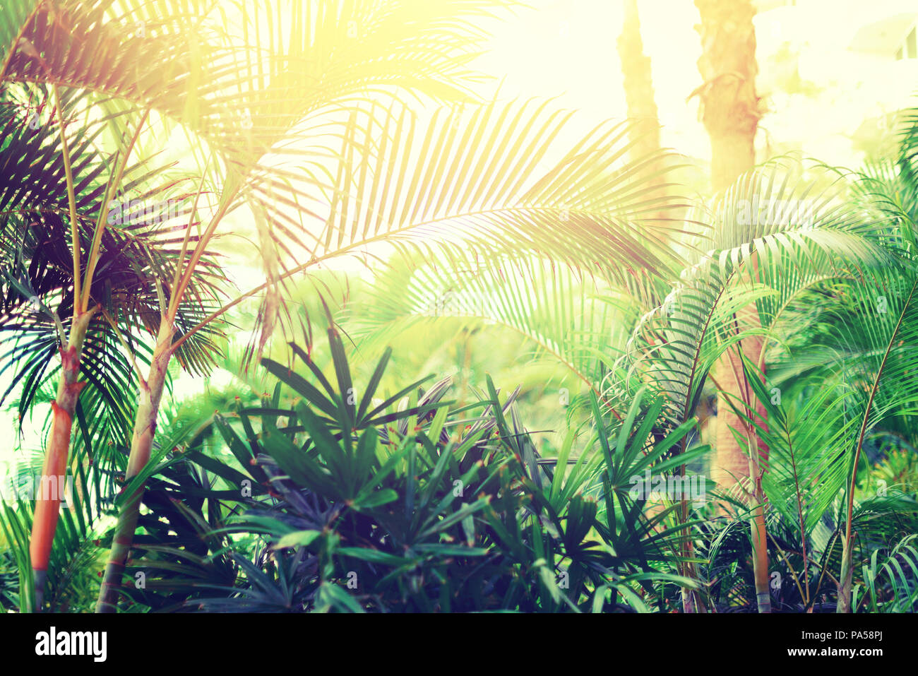 Tropical Palm Tree With Sun Bokeh Effect And Light Leaks Abstract
