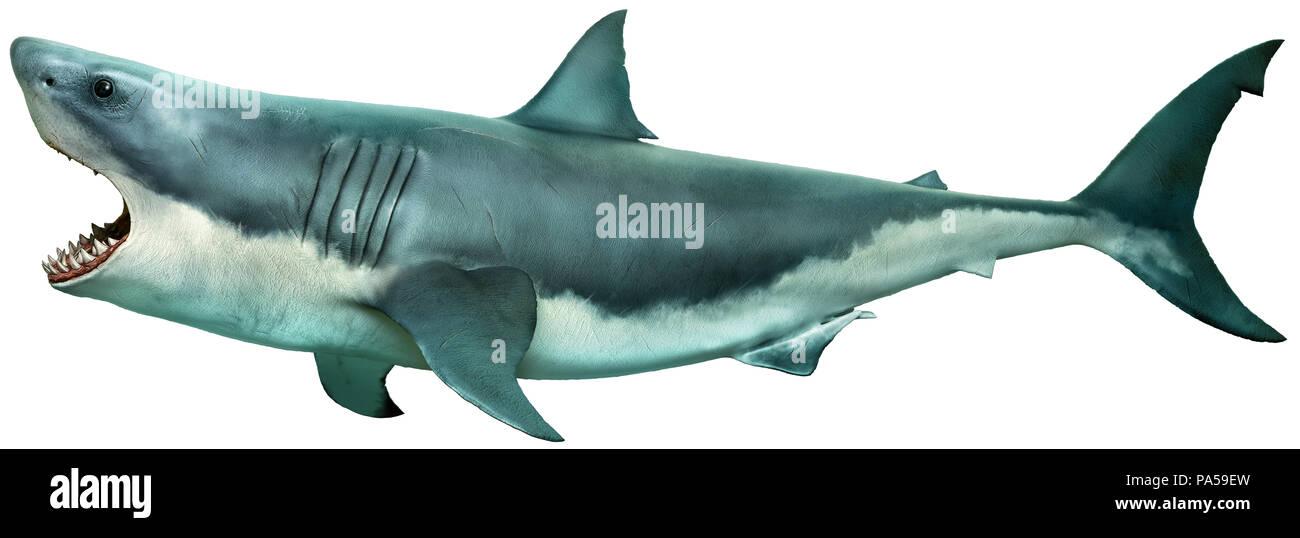 great white shark side view 3d illustration stock photo