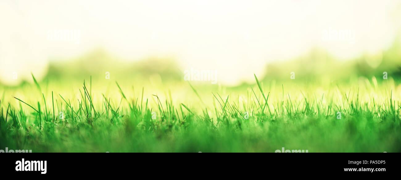 Unduh 48+ Background Banner Alam HD Paling Keren