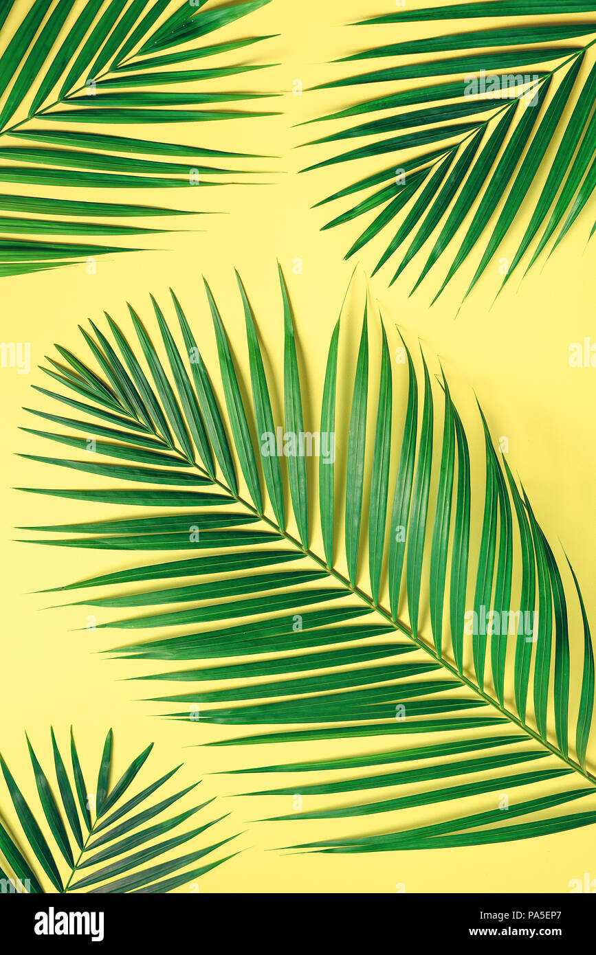 Tropical Palm Leaves On Pastel Yellow Background Minimal Summer Concept Creative Flat Lay With Copy Space Top View Green Leaf On Punchy Pastel Pape Stock Photo Alamy Download premium png of hand drawn tropical leaves png transparent background by manotang about leaf, leave, botanical, plant and. https www alamy com tropical palm leaves on pastel yellow background minimal summer concept creative flat lay with copy space top view green leaf on punchy pastel pape image212792335 html