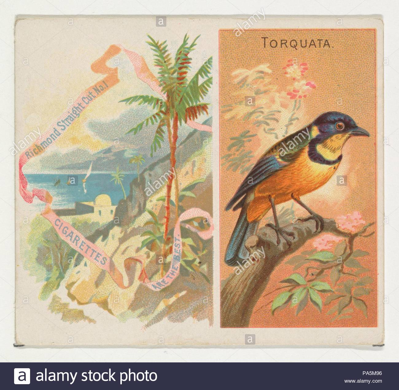 Torquata, from Birds of the Tropics series (N38) for Allen & Ginter Cigarettes, 1889, Commercial color lithograph, Sheet: 2 7/8 x 3 1/4 in. (7.3 x 8.3 cm), Trade cards from the 'Birds of the Tropics' series (N38), issued in 1889 in a set of 50 cards to promote Allen & Ginter brand cigarettes. This series is a physically larger version of the 'Birds of the Tropics' set (N5), including the corresponding small card design with other pictorial matter added. - Stock Image