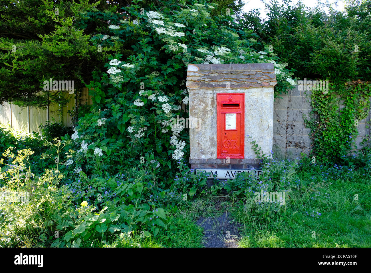 Wall recessed letter box surrounded by flowering plants - Stock Image