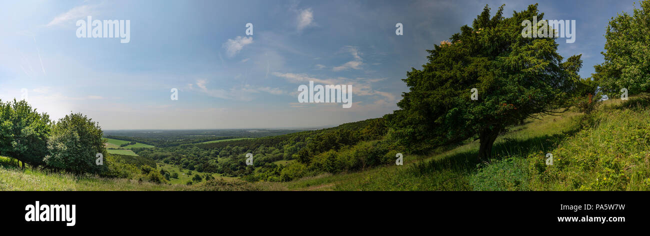 Kingley Vale ancient yew forest overlooking Chichester, West Sussex, UK - Stock Image
