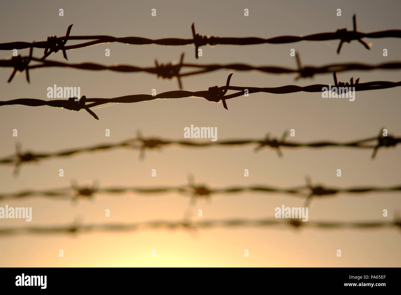 Barbed wire and sun - Stock Image