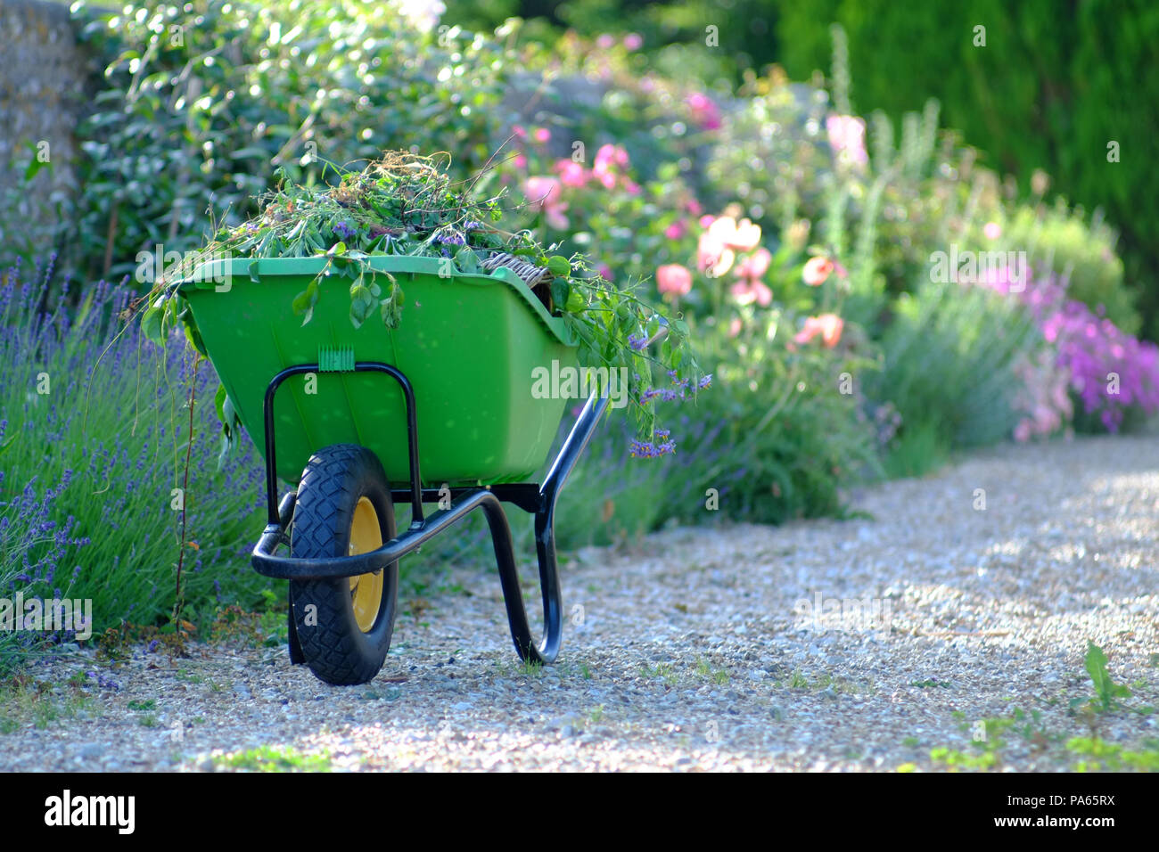 Green wheelbarrow in an English country garden. - Stock Image