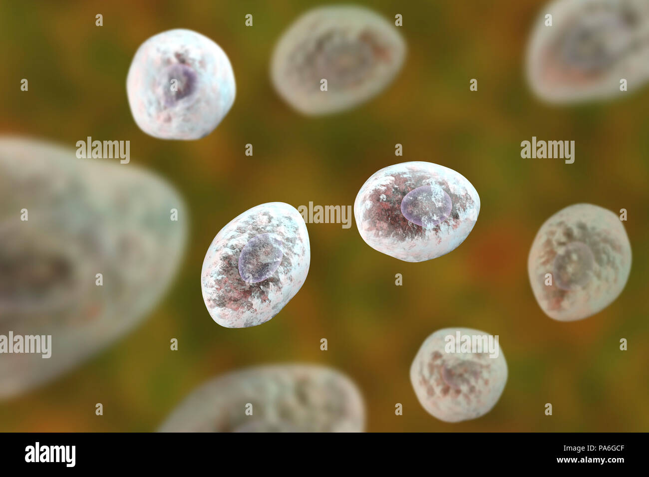 Pneumocystis jirovecii (formerly known as Pneumocystis