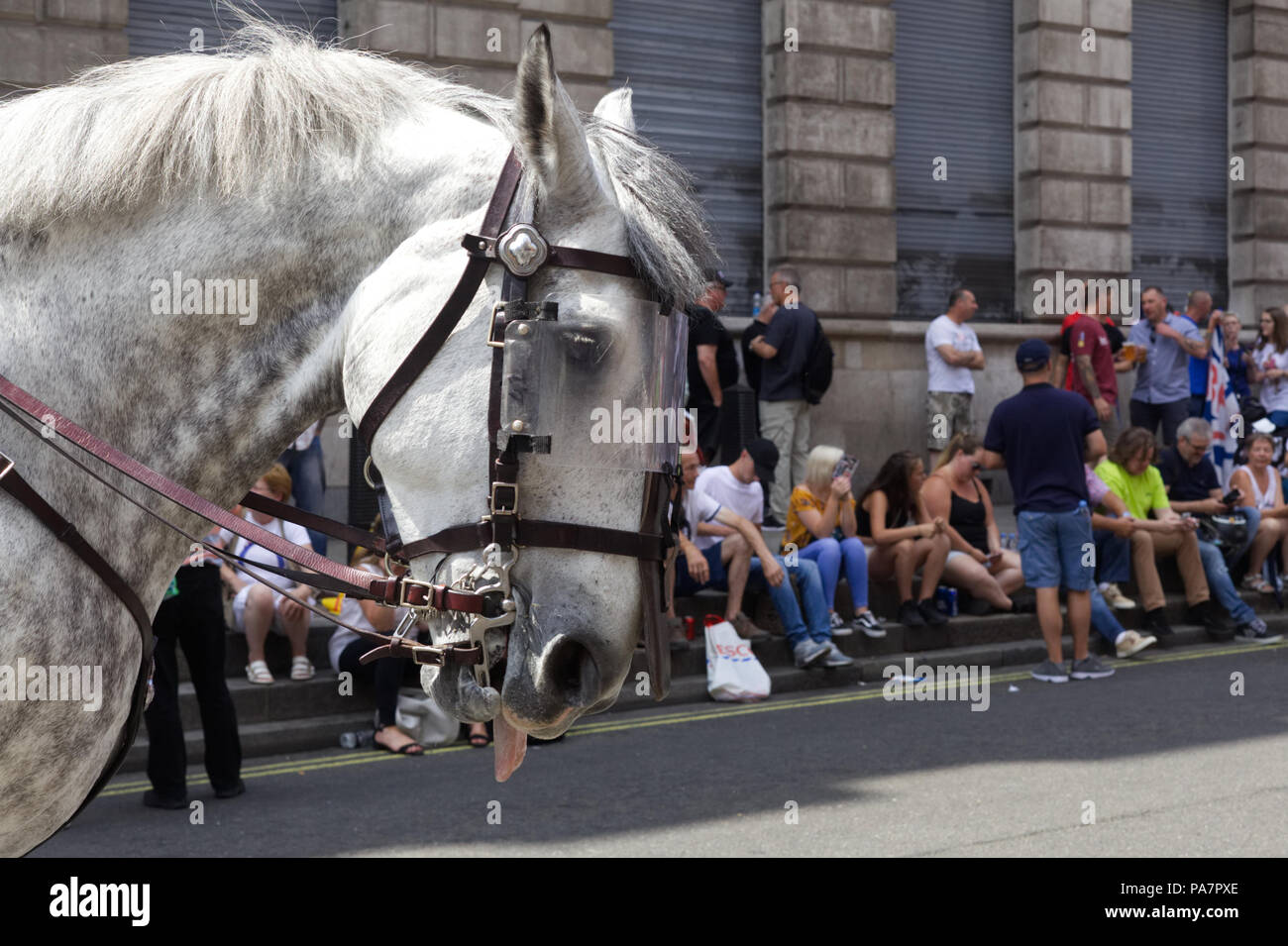 Police Horse In Full Riot Gear With Tong Out Stock Photo Alamy