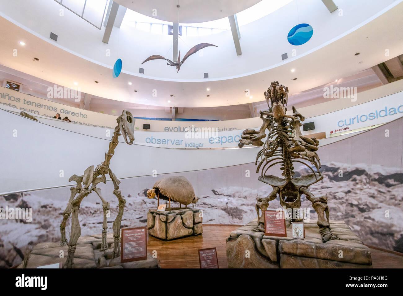 Natural Sciences Museum (Museo Provincial de Ciencias Naturales) Interior - Cordoba, Argentina - Stock Image
