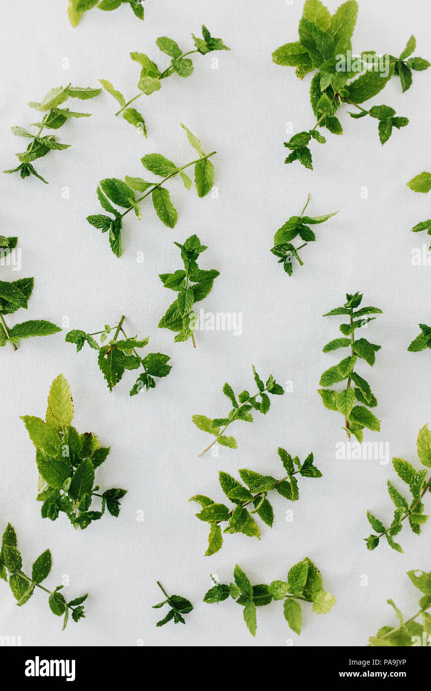 Peppermint leaves fresh cut and scattered on white background. Preserving peppermint aroma by natural air-drying. Directly above, isolated. - Stock Image