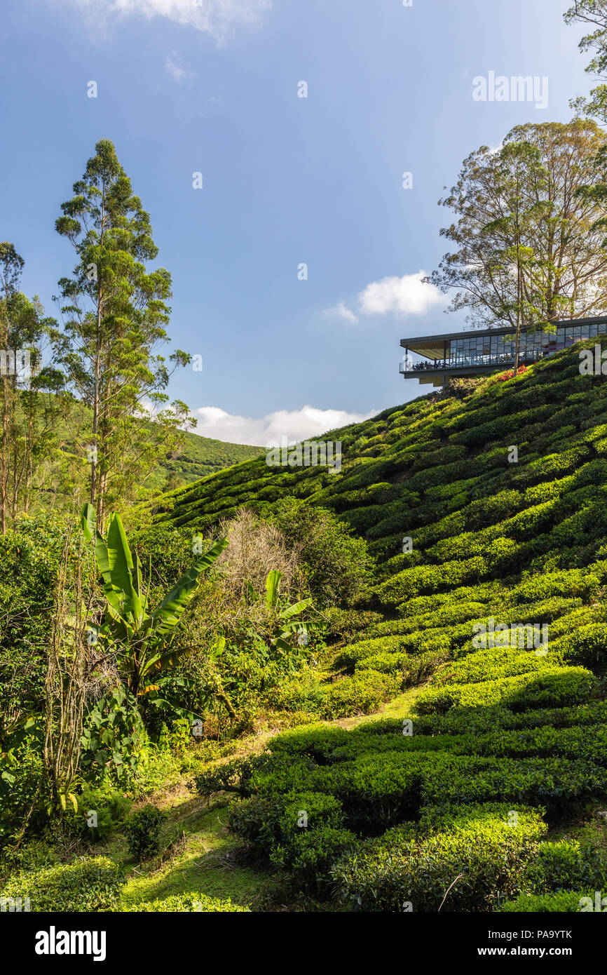 Tea plantations in the Cameron Highlands, Malaysia - Stock Image