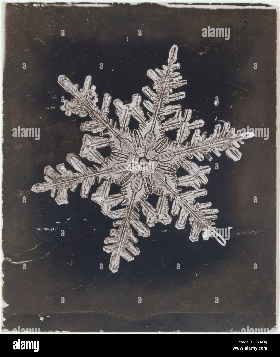 [Snow Crystal]. Artist: Wilson Alwyn Bentley (American, 1865-1931). Dimensions: Image: 7.4 x 9 cm (2 15/16 x 3 9/16 in.). Date: ca. 1910.  A self-educated farmer from Jericho, Vermont, Bentley was a pioneer in the field of photomicrography. Using a microscope fitted to a bellows camera, he was the first to photograph a single snowflake. For over half a century, he pursued his obsession with the unique forms of snow crystals, cataloguing the endless variations on a basic hexagonal structure. In addition to their formal beauty, Bentley's photographs are fine examples of a typological approach in - Stock Image