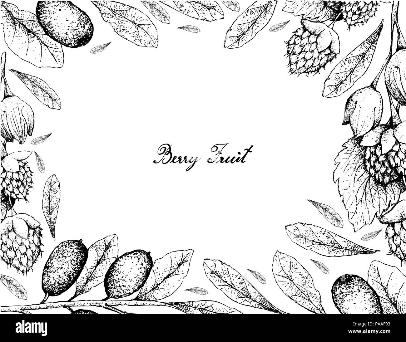Tropical Fruits, Illustration Frame of Hand Drawn Sketch Fresh Elaeagnus Ebbingei, Oleaster or Ebbings Silverberry and Golden Himalayan Raspberries or - Stock Vector