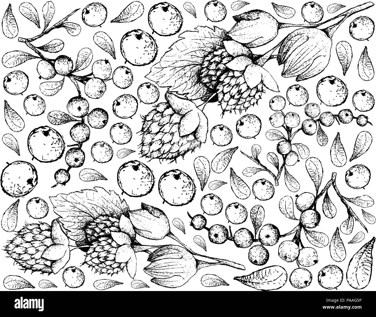 Berry Fruits, Illustration Wallpaper of Hand Drawn Sketch Delicious Fresh Golden Himalayan Raspberries or Rubus Ellipticus and Flueggea Virosa Fruits  - Stock Vector