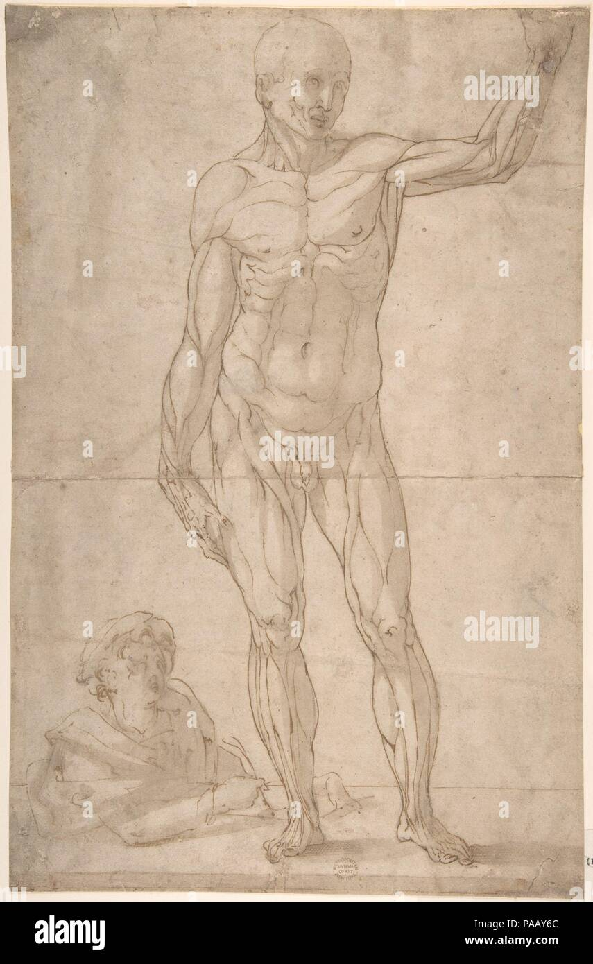Study Of Anatomy A Youth Drawing An Ecorch Of A Standing Man