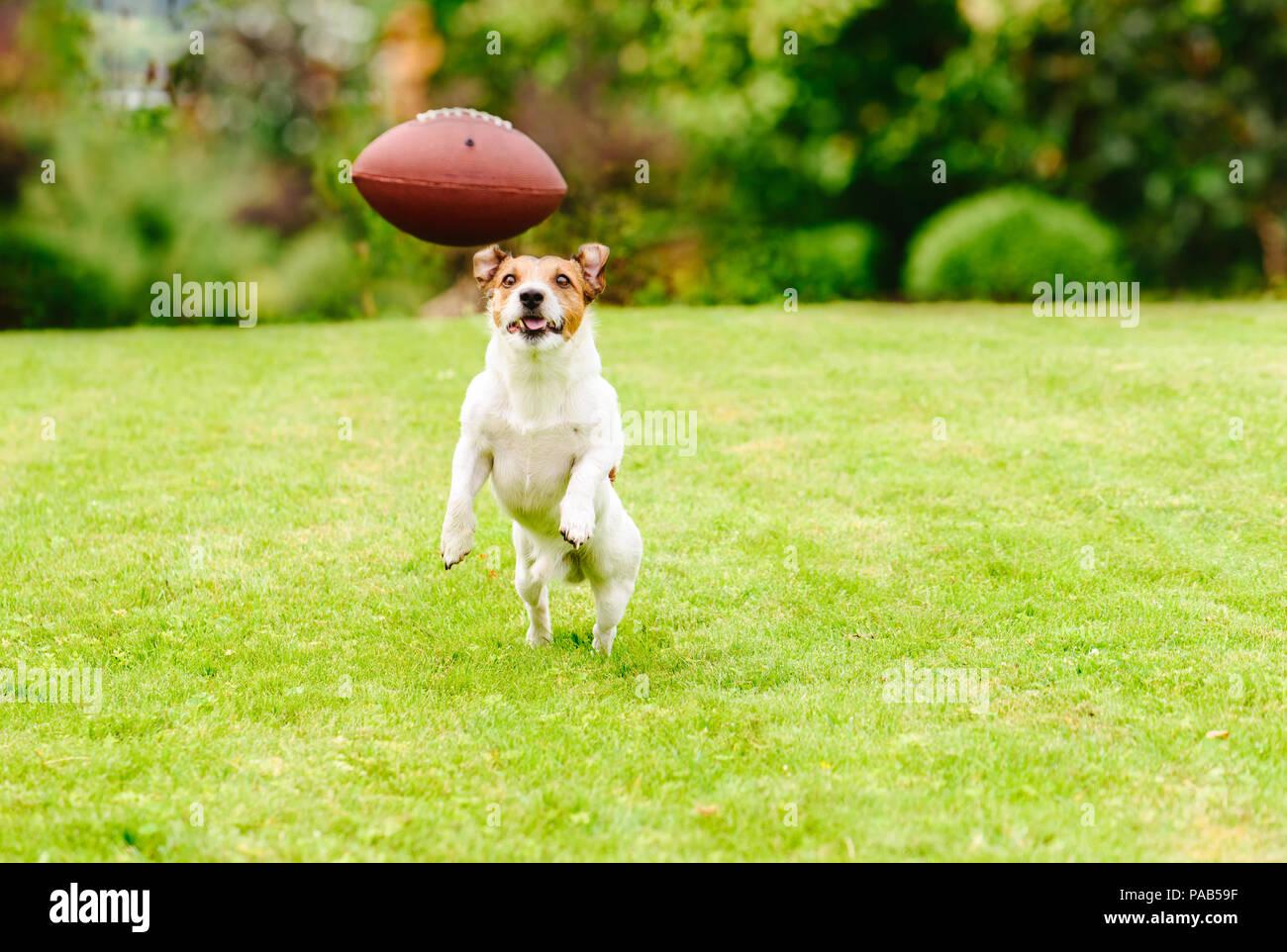 Funny dog playing with american football ball at backyard lawn - Stock Image