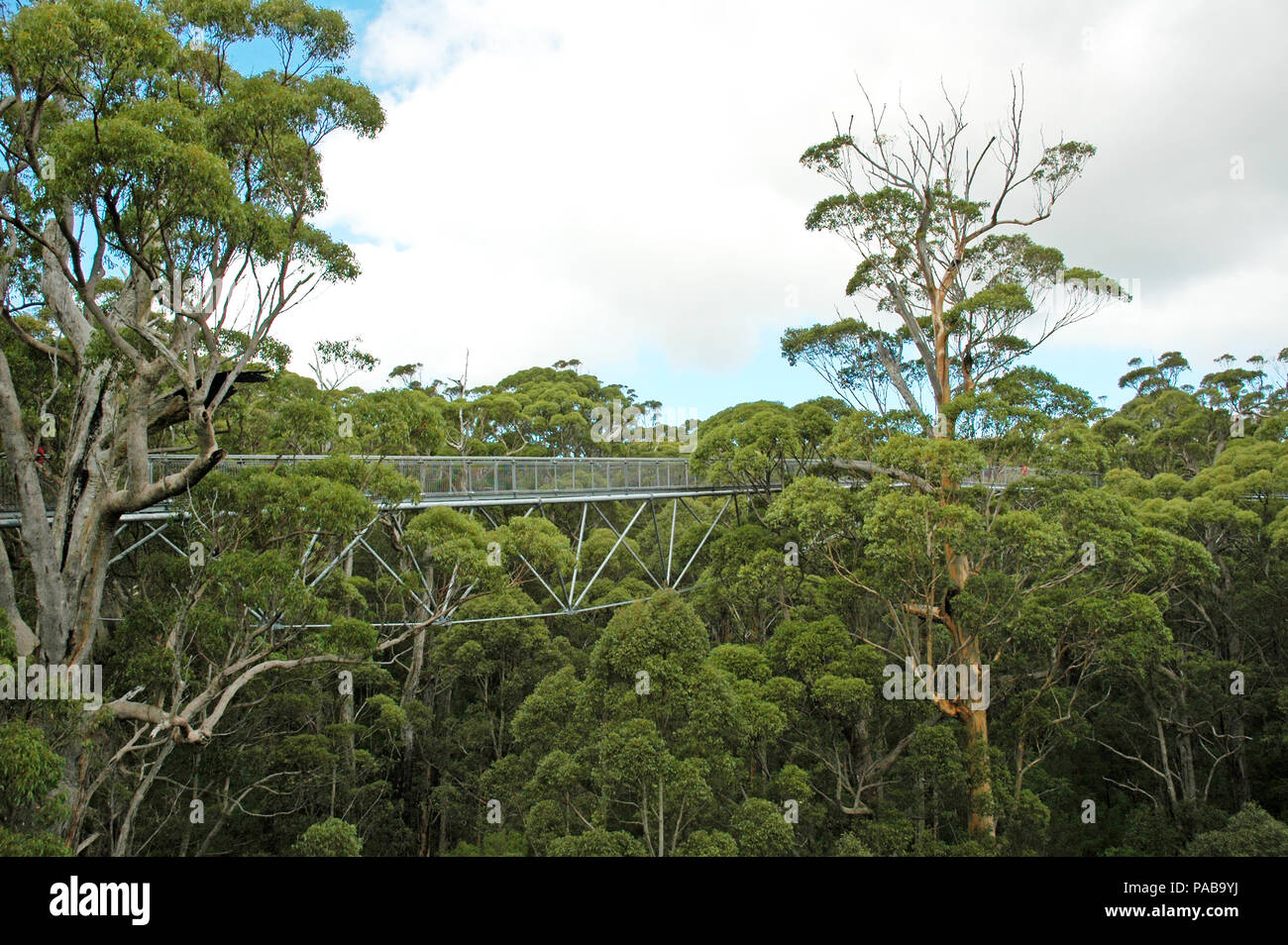 Part of the tree top walk in The Land Of The Giants.  Denmark, Western Australia.  Two people just visible. - Stock Image