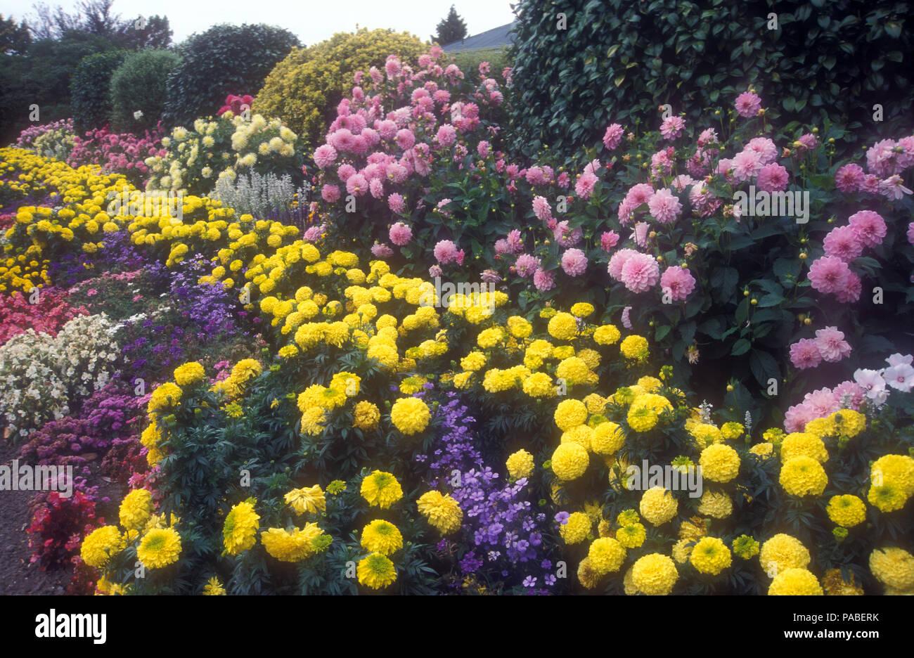 Large Blue Mountains Garden Featuring A Garden Bed Of Pink Dahlia