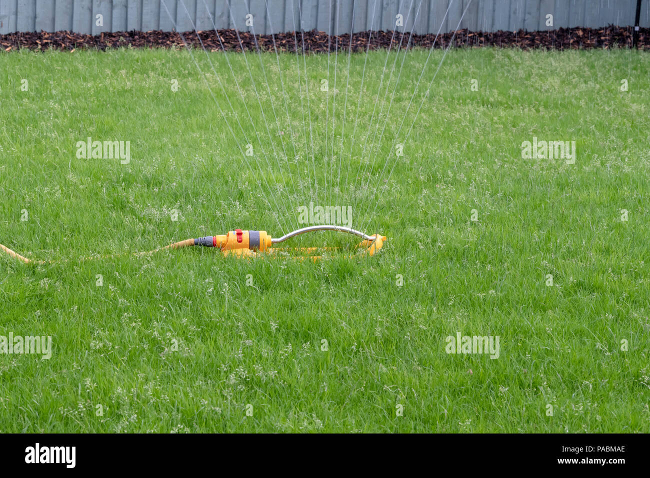 Sprinkler attached to a yellow hose being used to water a grass lawn - Stock Image