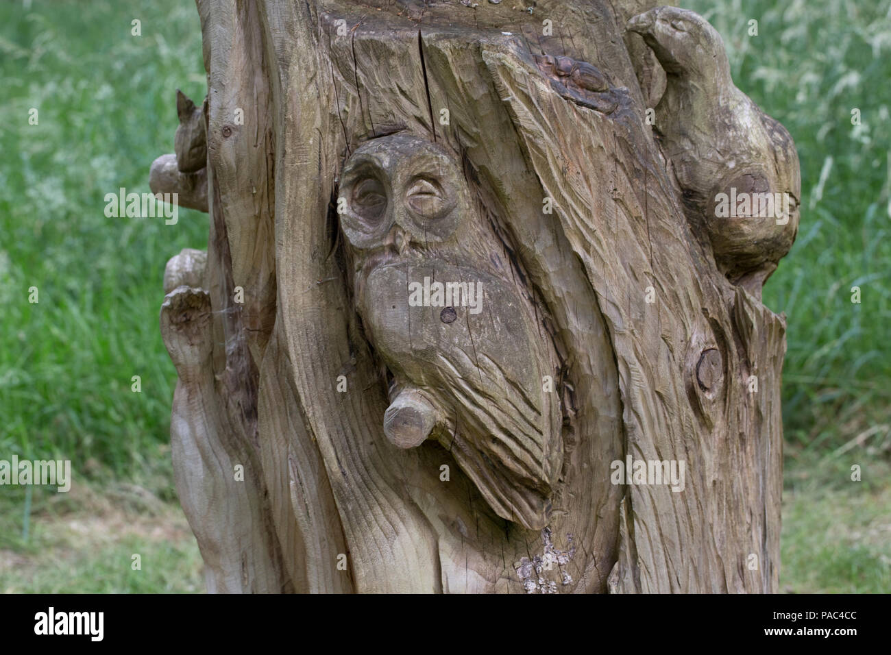 Carved tree stump with wildlife carvings Wood of Cree RSPB Nature Reserve Newton Stewart Dumfries and Galloway Scotland - Stock Image