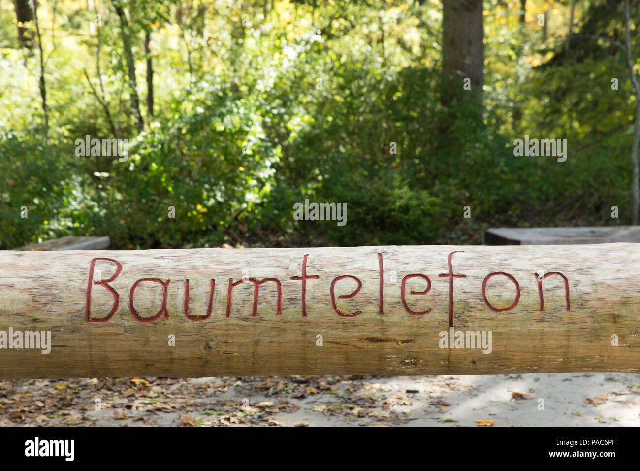 Tree telephone, autumnal forest at Forest Experience Centre Ziegelwiesen, Füssen, Bavaria, Germany Stock Photo