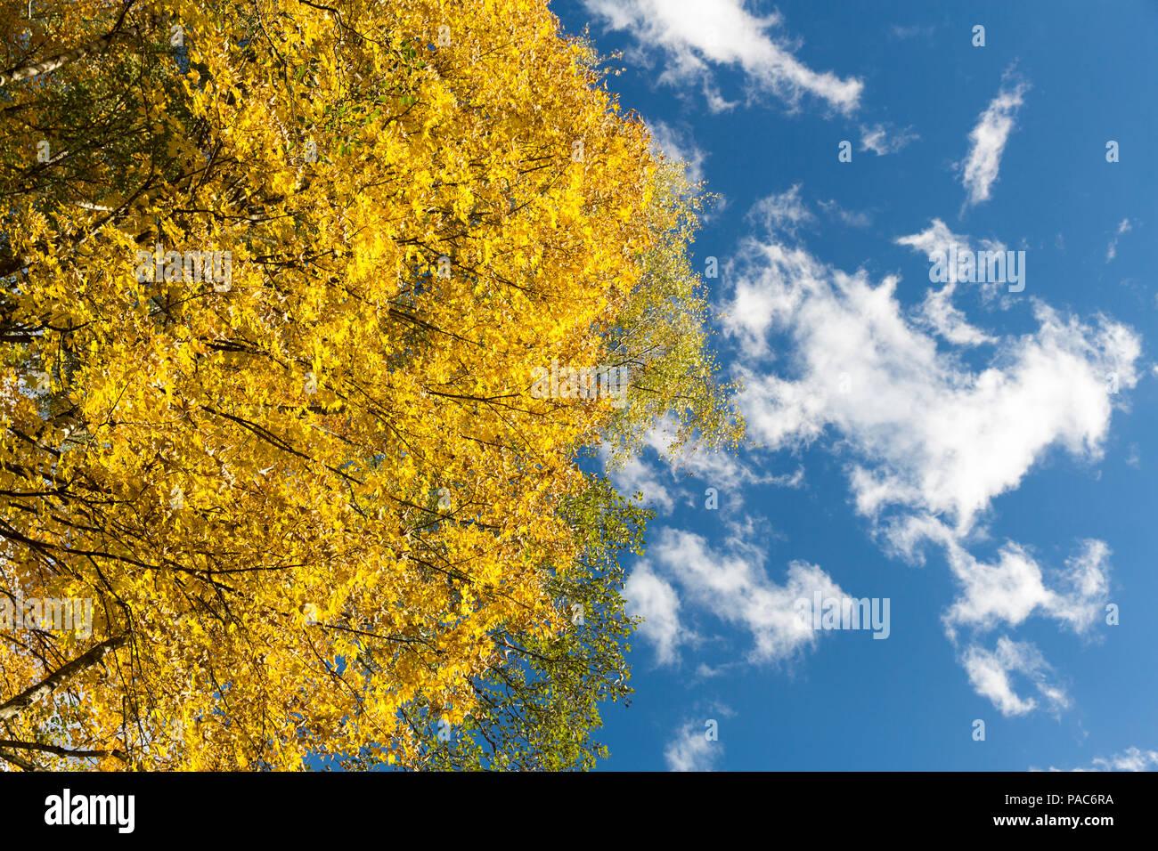 Autumn forest at Forest Experience Centre Ziegelwiesen, Füssen, Bavaria, Germany Stock Photo