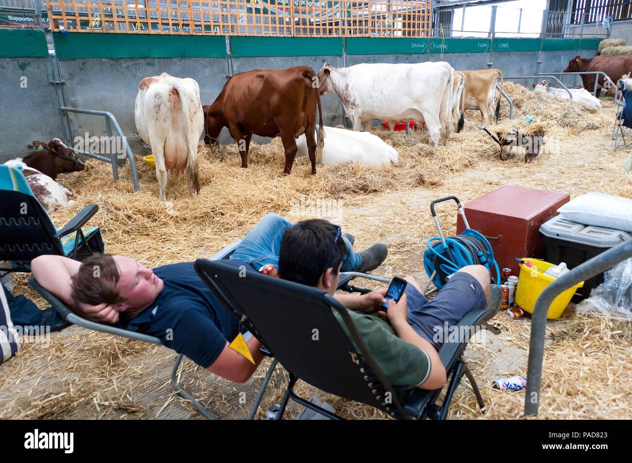 Llanelwedd, Powys, UK  22nd July 2017  People relax in the cattle