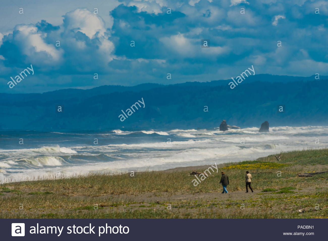 Tremendous surf hitting the beach at Redwood National Park, northern California USA. Stock Photo