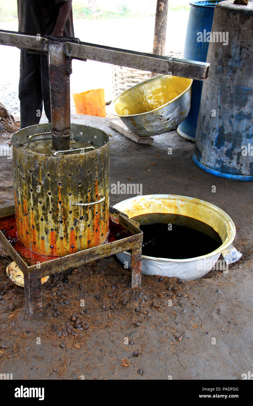Palm oil squeezer/cooker setup at a palm oil factory near Cape Coast, Ghana - Stock Image
