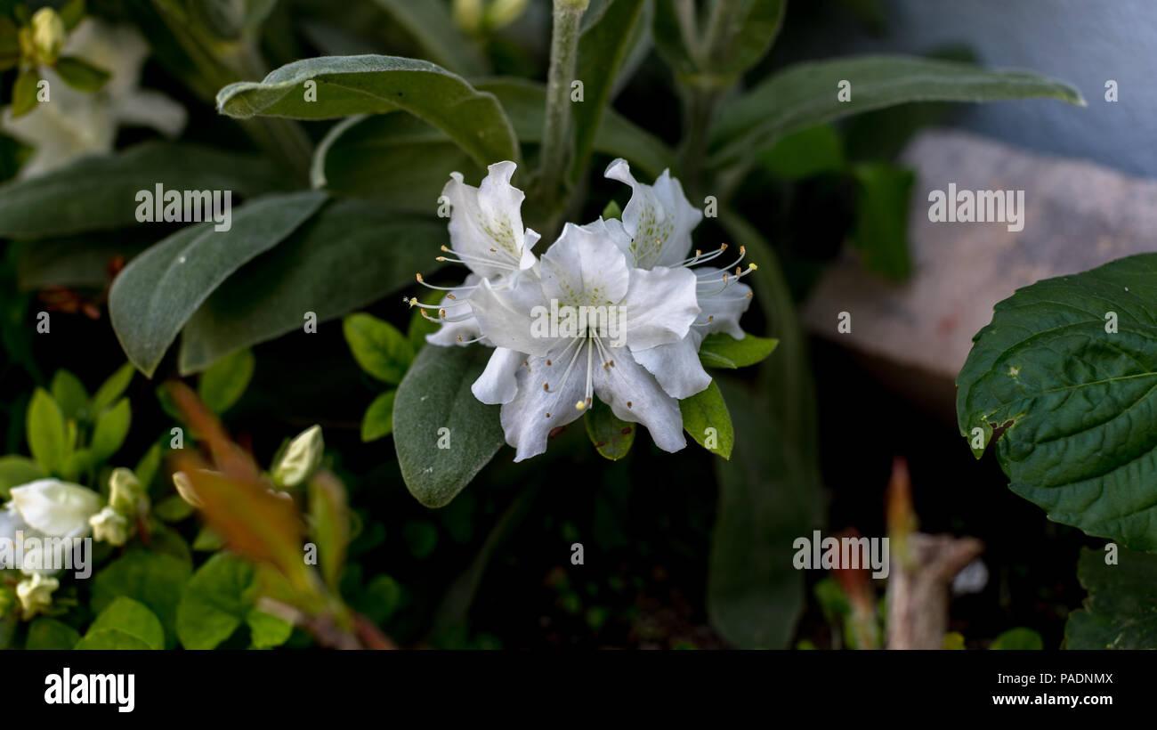 Beautiful flower stock photo 212973402 alamy beautiful flower izmirmasajfo