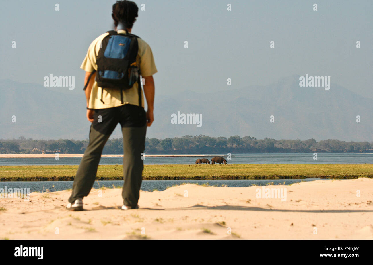 Walking Safari. Mana Pools National Park. Zimbabwe - Stock Image