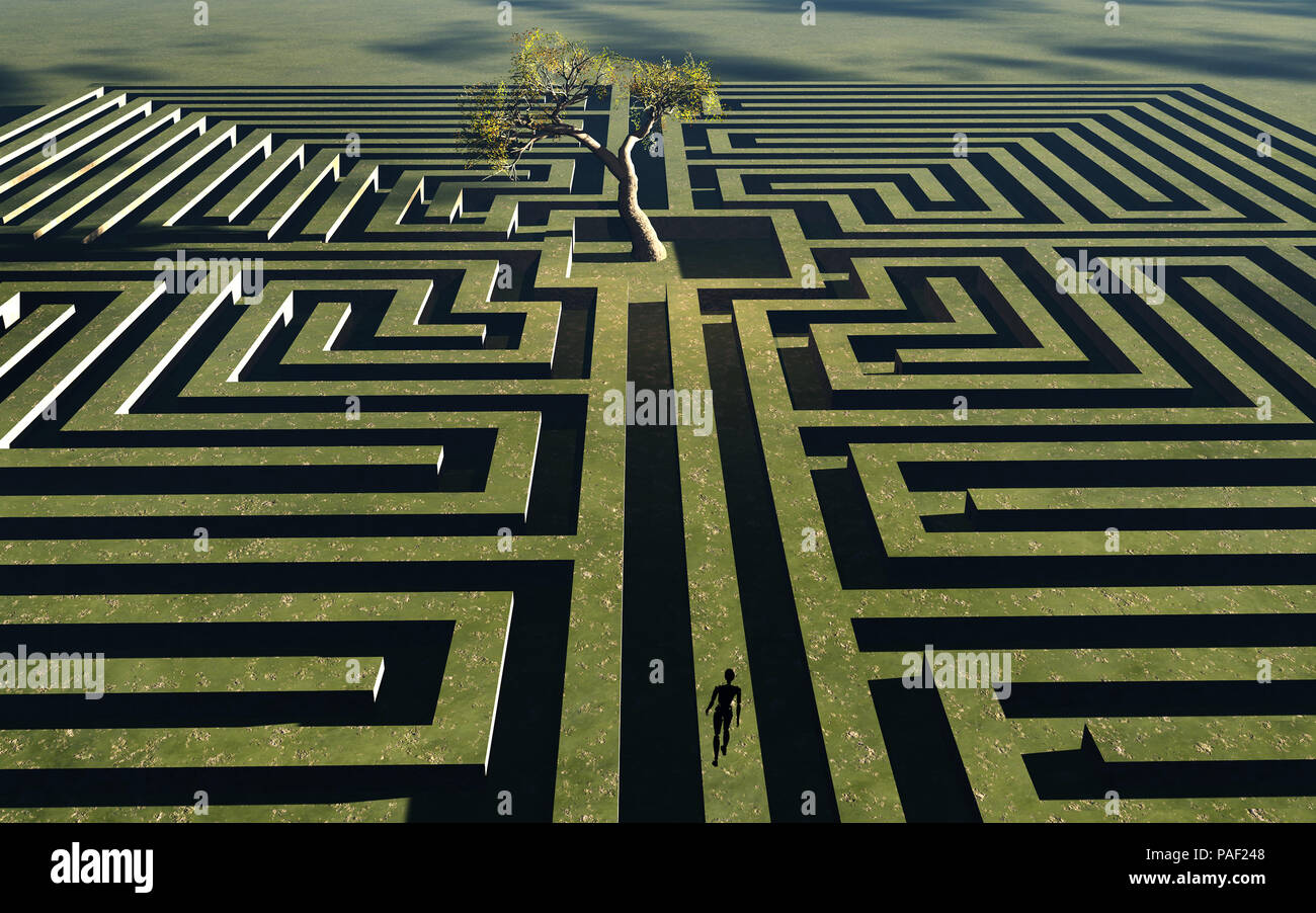 Tree Maze - Stock Image
