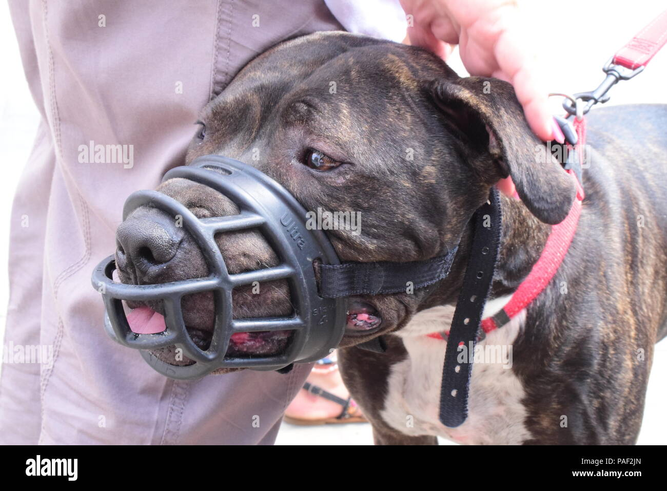 Anti BSL Protest In Westminster, London - Stock Image