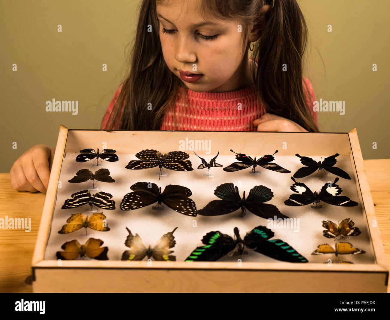 Little Girl Scrutinizes Entomology Collection of Tropical Butterflies - Stock Image