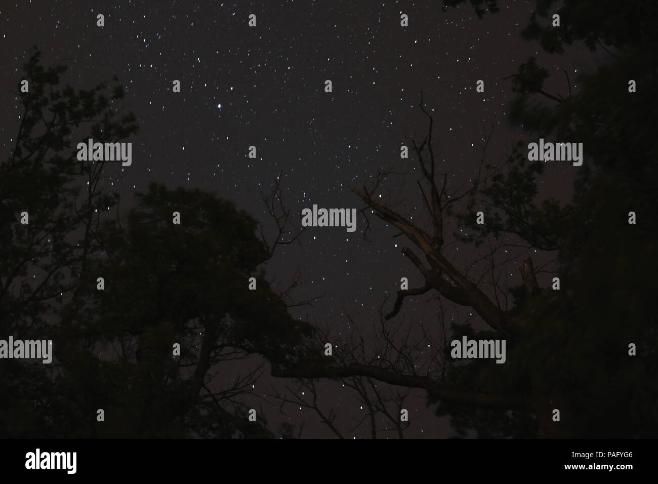 The nights firmament over a forest - Stock Image